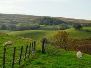 sheep-hillside